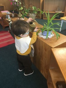 Young child watering plants